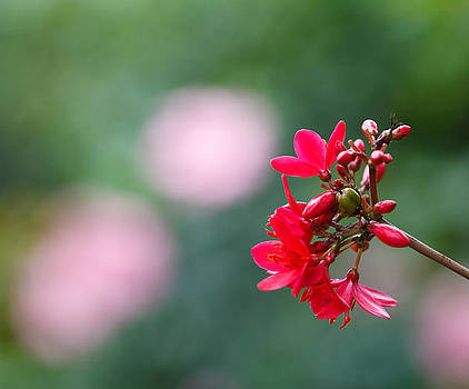 Red and Pink by Bob Decker