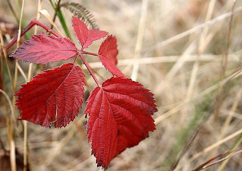 Red Spot Leaf by Cora Brum