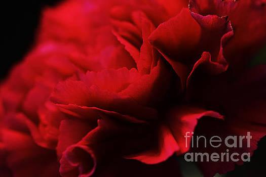 Red Velvet by Pamela Gail Torres