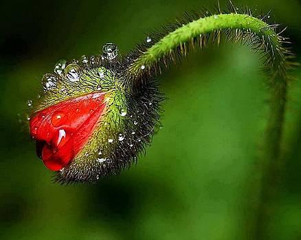Reddygreen by Yaa Hughes