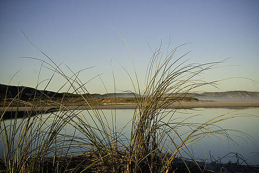 Reeds 2 by Penny Roberts