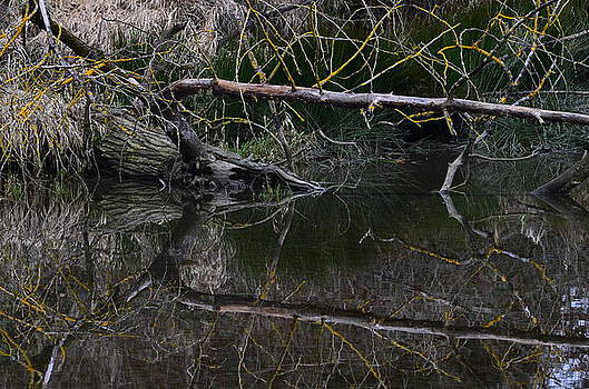 Reflections #2 by Don Herd