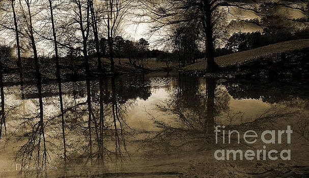 Reflections on a Wintry Day by Jinx Farmer