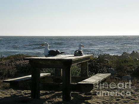Retirement Couple Picnic at the Beach by Bev Conover