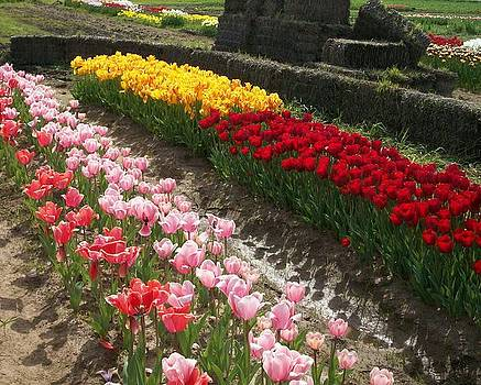 Roadside Tulips by Brooke Finley