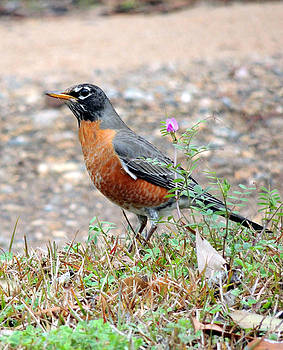 Robin-Pretty is-is as Pretty does by Kim Pate