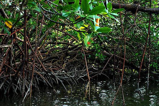 Rookery Bay Mangroves 01 by Carol Kay