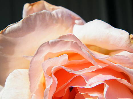 Rose for you by Matthew Kay