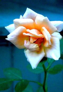 Roses are Orange by Melissa Jones