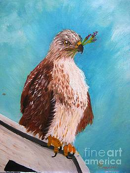 Rough Legged Hawk  by Betty and Kathy Engdorf and Bosarge