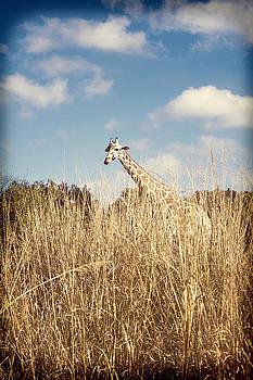Safari Giraffe  by Tiffany Zumbrun