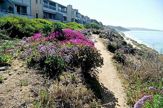 San Diego Coastline by Rose Szautner