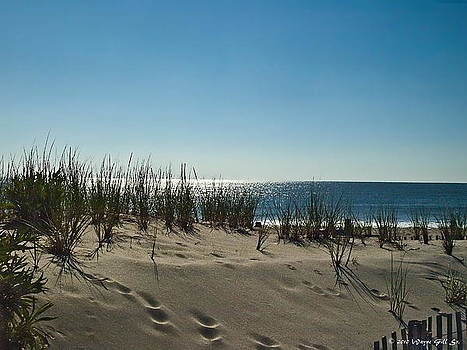 Sand Dune by Wayne Gill
