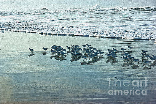 Sanderlings by Nur Roy