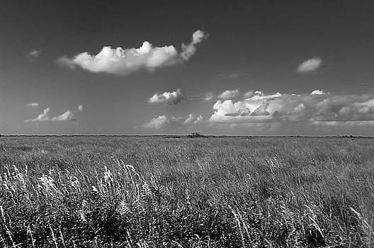 Sawgrass Prairie  by Andres LaBrada