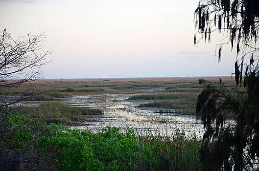Sawgrass to Horizon  by Ken  Collette