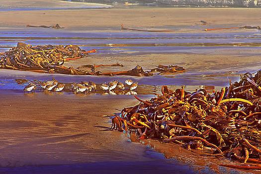 Seabirds by Tony Reddington