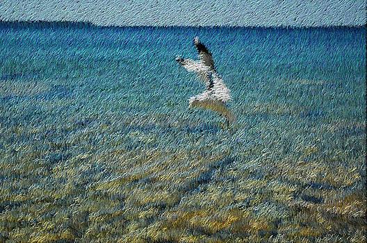 Seagull by Bob Frase