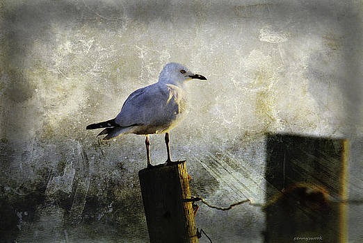 Seagull on a Fence by Penny Roberts