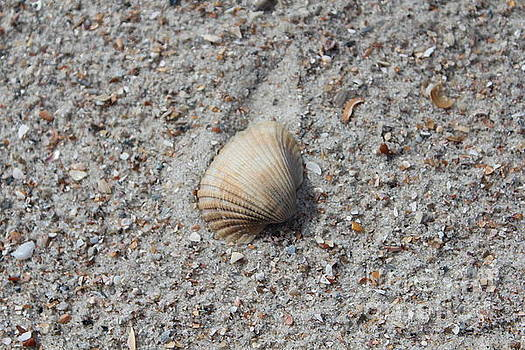 Seashell by Joanne Askew