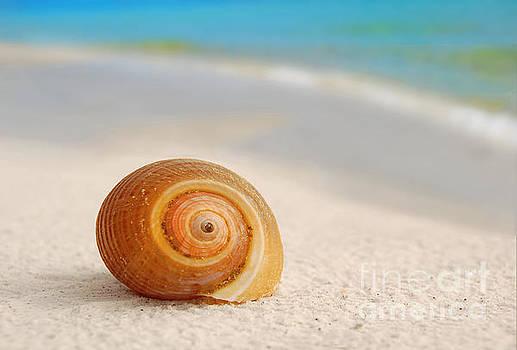Seashell on Seashore by Cheryl Casey