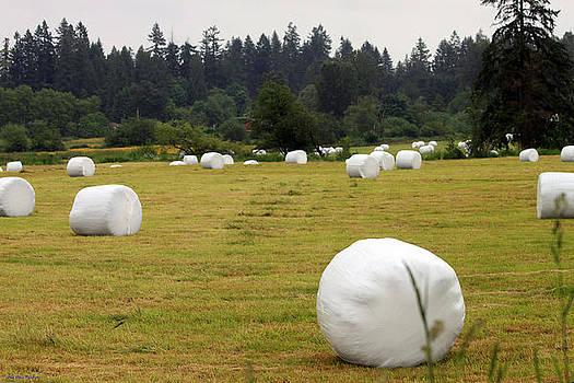 Secret Fraser Valley Giant Marshmallow Farm by Ed Nicholles