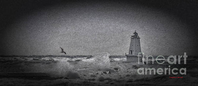 Serenity by Timothy J Berndt