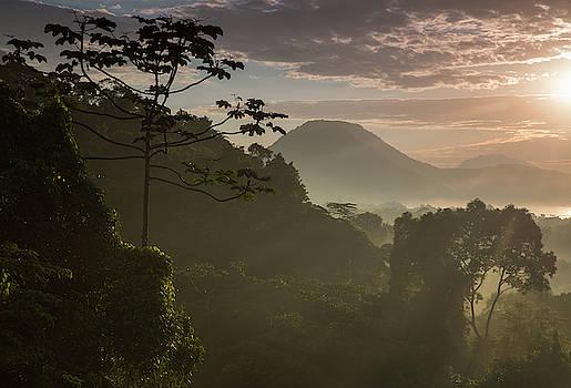 Serra Do Mar Forest In Sao Paulo State by Alex Saberi