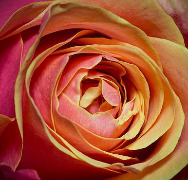 Simple Beauty by Padma Inguva