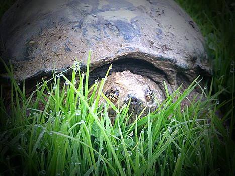 Snapping Turtle by Amanda Bobb