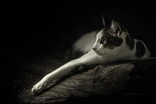 Sneak Around Cat by Jens Tischer