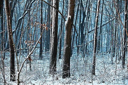 Snow at Dusk by Tim Michael