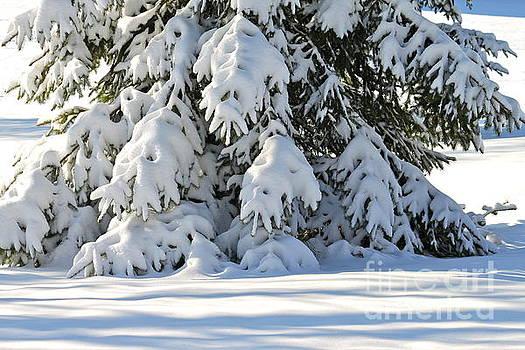 Snow Christmas Tree by Jay Nodianos
