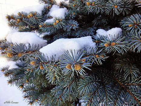 Snow covered spruce by Mikki Cucuzzo
