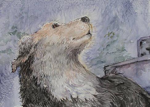 Snow Dog by Barbara Torke