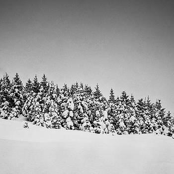Snow on tree by Frodi Brinks