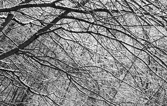 Snowy Trees Brereton Heath by Derek Sherwin