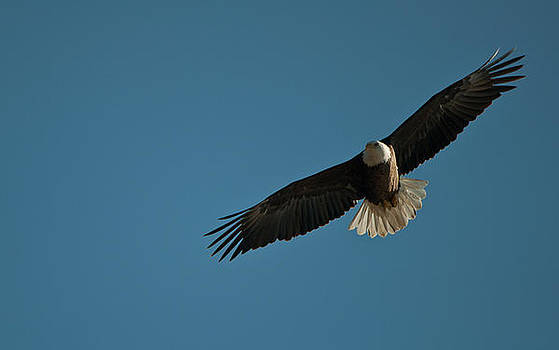 Soaring by Dave Weth