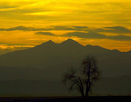 Solo tree with Longs Peak by Rebecca Adams