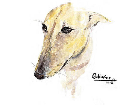 Spanish Galgo  by David Iglesias