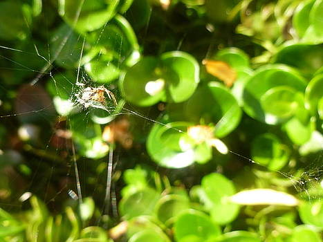 Spider's Web 3 by Montana Wilson