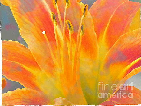 Splash of Color Lily by Laurie Wilcox