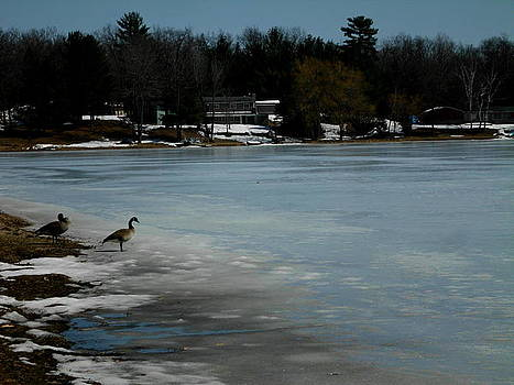 Spring Geese on a Beauitfully Frozen Shoreline by Erica  Darknell