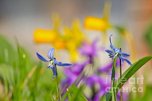 Spring by Jay Nodianos