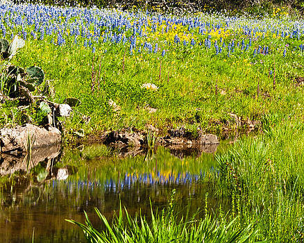Spring Reflection by Thomas Pettengill