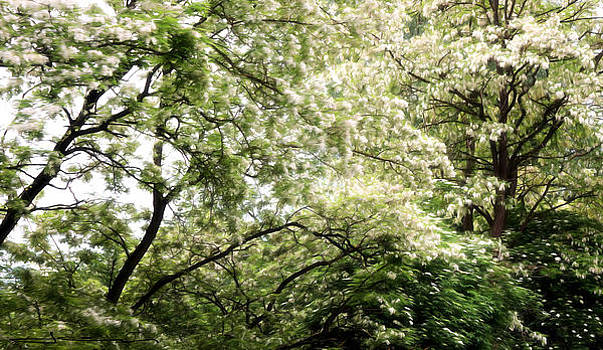 Springtime Burst by Jens Tischer