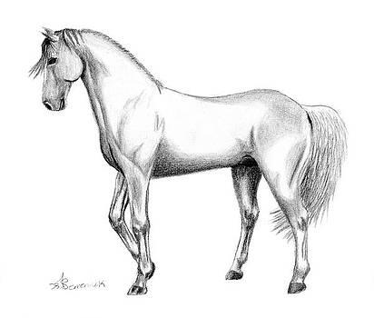Stallion Pride by Kayleigh Semeniuk