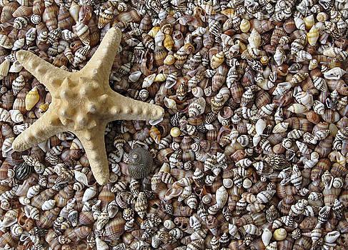 Starfish and seashells by Kiril Stanchev