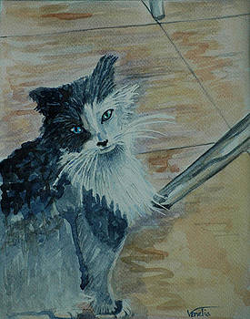 Stray Kitty by Venetia Bebi