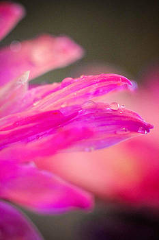 Stunning In Pink by Christy Patino